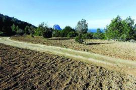 El Consell d'Eivissa considera ahora que la mansión de Cala d'Hort sí afecta a la genista