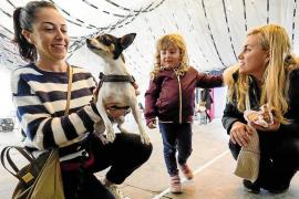 Sant Antoni loves animals