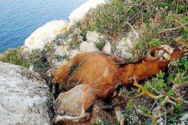 Alegan que el informe pericial sobre las cabras de es Vedrà «carece de objetividad»