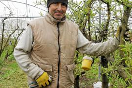 Estirpe de fruticultores en Alaior