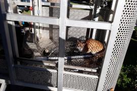 Bomberos rescatan a un gato atrapado en un árbol de Siesta