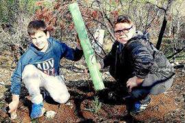 Escolares plantan 200 sabinas en el área calcinada de sa Talaia de Sant Antoni