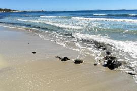 Los últimos temporales sacan a la luz una barcaza salinera en la playa de ses Salines