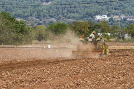 El Consell d'Eivissa propone que la extensión mínima para una parcela agraria se reduzca un 20%