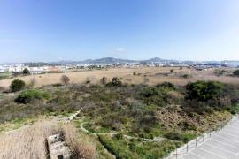 Ses Feixes des Prat de Vila se va recuperando un año después del incendio