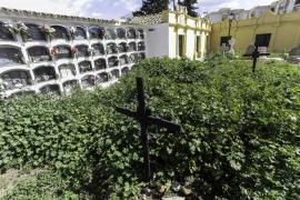 Una 'selva' en el Cementeri Vell de Ibiza