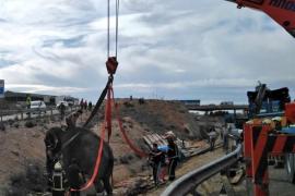 El accidente de la A-30 se salda con un elefante muerto y dos heridos
