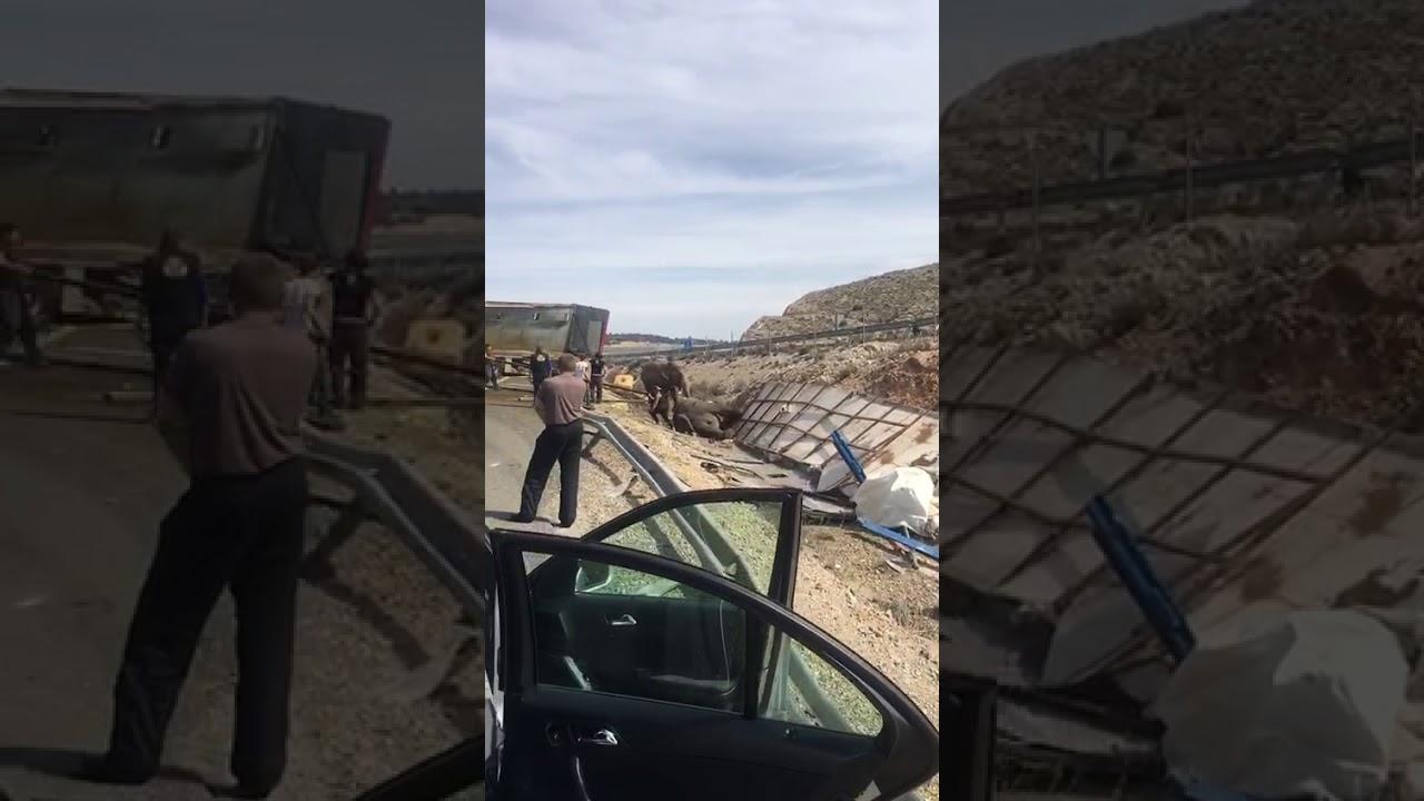 Los elefantes heridos se recuperan en Pozo Cañada y empiezan a alimentarse