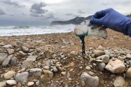 Encontrados seis ejemplares de carabela portuguesa en la zona de Es Torrent