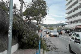 El fuerte viento tumba árboles y cierra el puerto de la Savina durante horas