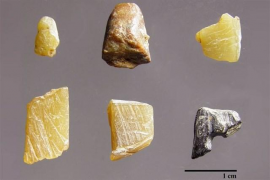 La cooperación salvó al Homo Sapiens en Europa hace 40.000 años