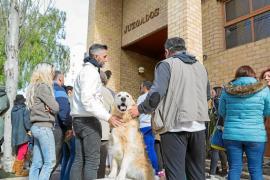 Vila reforzará la vigilancia en el Centro de Protección Animal de Sa Coma