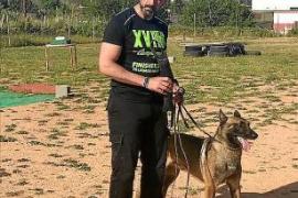 Policía Local y Guardia Civil realizan un operativo en Sant Antoni con Rino, el nuevo agente canino