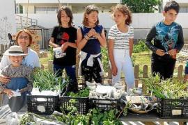 Tradiciones y cambio climático en las fiestas del CEIP Es Vedrà y CEIP Sant Antoni