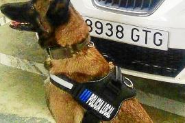 Un operativo policial levanta cuatro actas por posesión de drogas en zonas de ocio de Ibiza