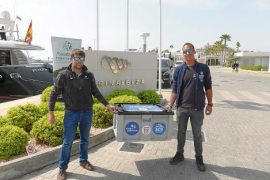 Marina Ibiza colaborará con Palma Aquarium para proteger las tortugas