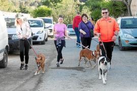 El placer de pasear perros abandonados
