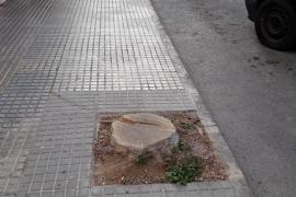 EPIC denuncia la tala «definitiva» e «injustificada» de árboles sanos en la ciudad de Ibiza