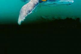 'Sonic sea', la mejor manera de concienciar sobre el drama de la contaminación acústica en los mares