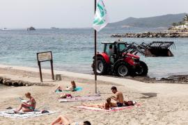Retiran la posidonia de las playas de Vila en plena temporada alta