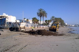 240 toneladas de posidonia vuelven a las playas