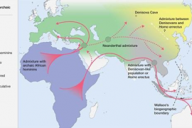 Homo sapiens creó un nuevo nicho ecológico que nos hizo prevalecer