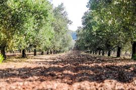 Las reservas hídricas bajan un 4% en Ibiza y la sitúan en un nivel de prealerta por sequía