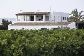 Imagen de una de las plantaciones de vino de Bodegas Can Rich