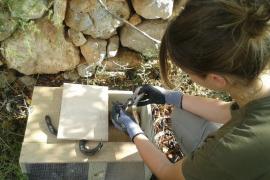 Iniciativa estatal para el control de las serpientes invasoras en las Islas