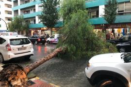 Cae un árbol por la tormenta en la avenida Isidor Macabich