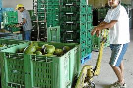 La mejora económica reactiva la llegada de mano de obra extranjera a Baleares
