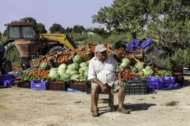 Los afectados por vertidos fecales en ses Salines denuncian la pérdida de cinco toneladas de cultivo