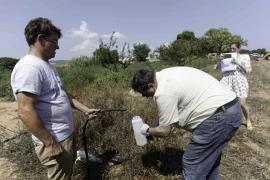 Las fincas de Ses Salines afectadas por vertidos de fecales recogen pruebas de la contaminación
