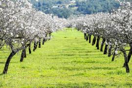 La Ley Agraria hace inviable la construcción de viviendas en suelo rústico en las Pitiusas