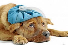 Claves en la alimentación de mascotas enfermas del corazón