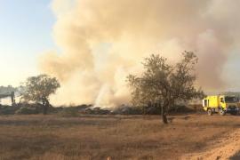 Incendio de rastrojos y troncos en Ca na Negreta