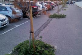 EPIC denuncia la dejadez en el cuidado de los árboles en Can Misses