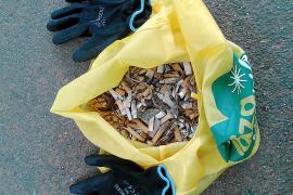 Más de dos toneladas de basura recogidas en Ibiza gracias al World Cleanup Day