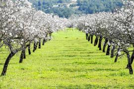 Las Pitiusas sólo reciben el 8,3 % del dinero para el mantenimiento del paisaje agrario