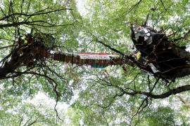 Un periodista que cubría las protestas contra la tala de un bosque en Alemania fallece tras caer de un árbol