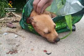 La Guardia Civil detiene a una persona por un delito de maltrato animal en Palma