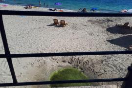 El Ayuntamiento espera retirar en breve el agua verde estancada en la playa de Santa Eulària