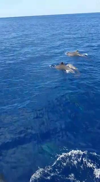 Vídeo | Un domingo de otoño navegando con delfines en Cala Bassa