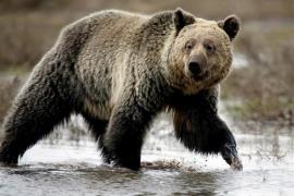 Muere un joven de 18 años tras ser atacado por un oso en Alaska