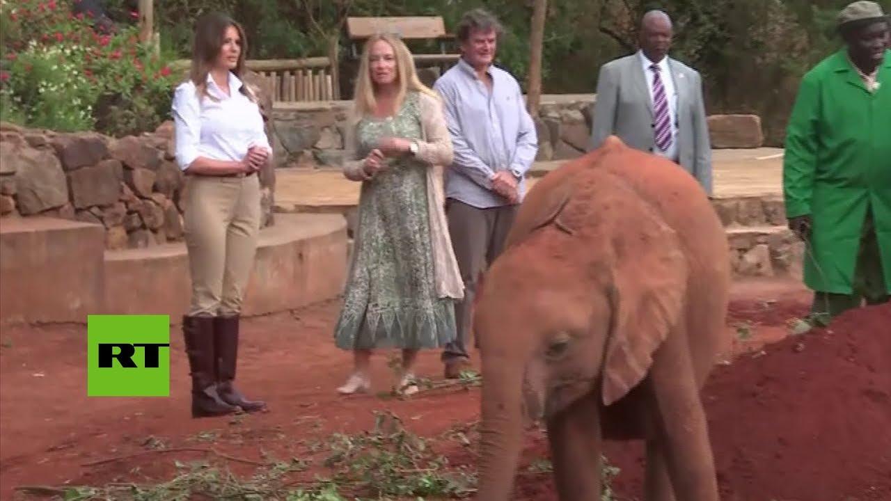 Un elefante empuja a Melania Trump en Kenia