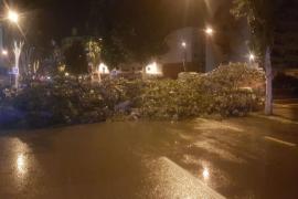 El temporal de viento y lluvia causa la caída de árboles y suspende varias conexiones marítimas