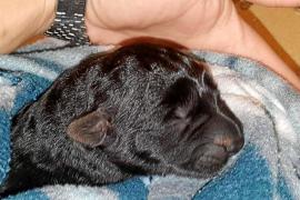 Sant Antoni hace un llamamiento para esclarecer la muerte de cinco cachorros