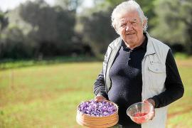 Eivissa se abre al cultivo del oro rojo