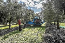PSIB y Més logran zanjar su disputa por la ley agraria con más poder para los consells