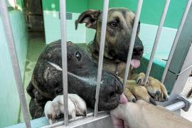 Incrementan las renuncias a mascotas como consecuencia de la falta de vivienda en Ibiza